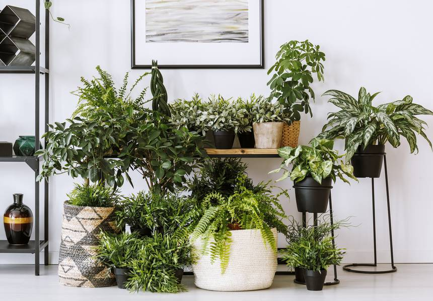 houseplants-mist.jpg.860x0_q70_crop-scale