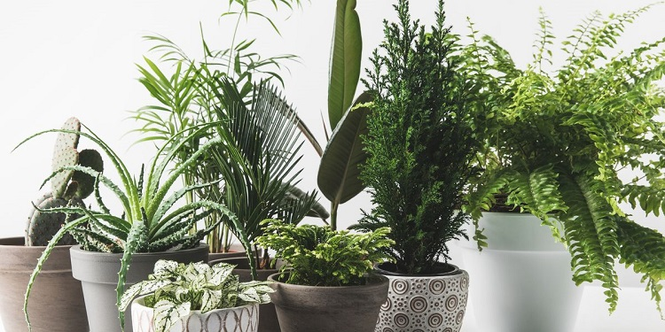 various-beautiful-green-plants-in-pots-on-white-royalty-free-image-931824676-1565950537