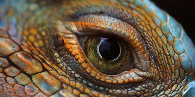 lizard-eye-one-click