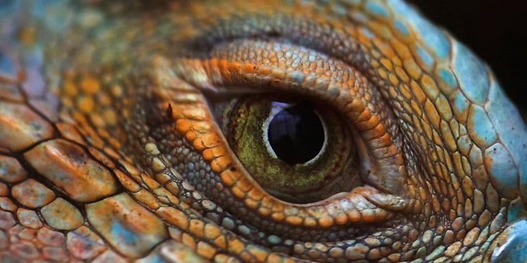 lizard-eye-one-click